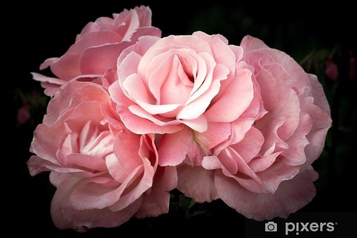 Fototapeta zmywalna Różowe róże, kwiaty na ciemnym tle, delikatny i romantyczny filtr vintage - Rośliny i kwiaty