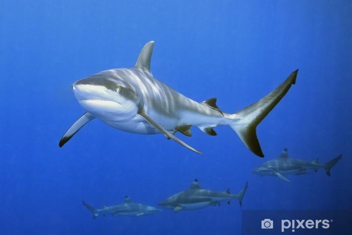 Sharks Pixerstick Sticker - Sharks