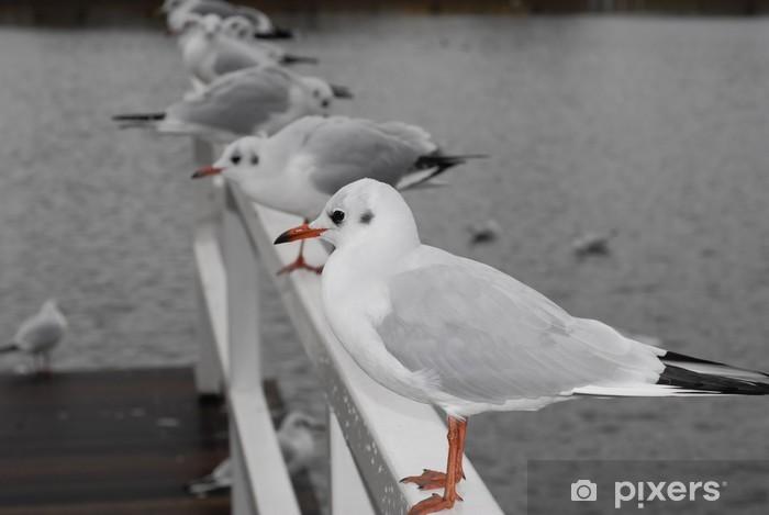 Fototapeta Winylowa Mewy Na Wiersz