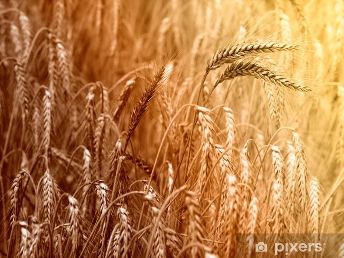 Fototapeta winylowa Upraw organiczna bliska - Rolnictwo