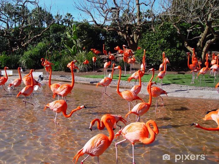 Vinylová fototapeta Flamingos - Vinylová fototapeta