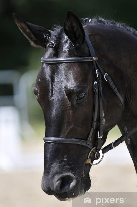 Fototapeta winylowa Głowa konia - Sporty indywidualne