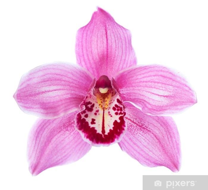 Papier Peint Gros Plan De Fleur D Orchidee Rose Cymbidium Isole
