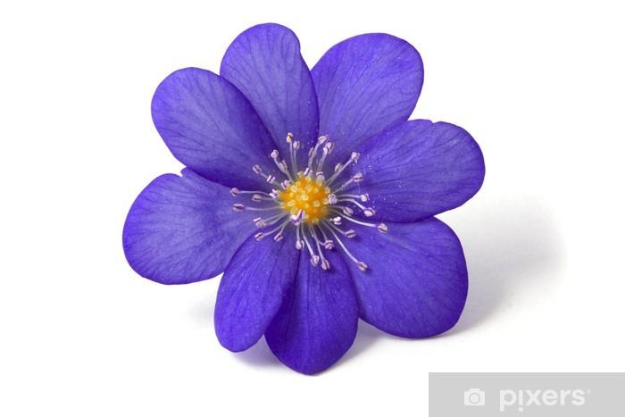 Sticker Resume De La Fleur Violette Pixers Nous Vivons Pour Changer