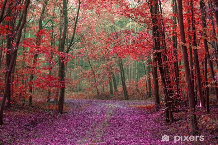 Prodotti il bosco incantato storie di terra e di dolcezza