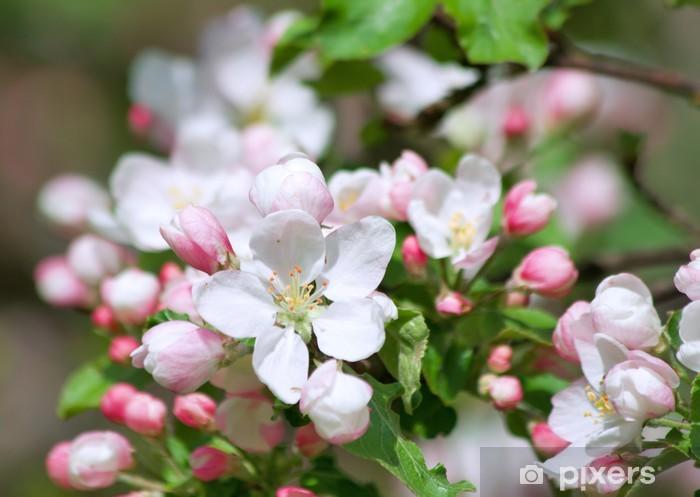 Vinilo Pixerstick Flor de manzano - Manzanos