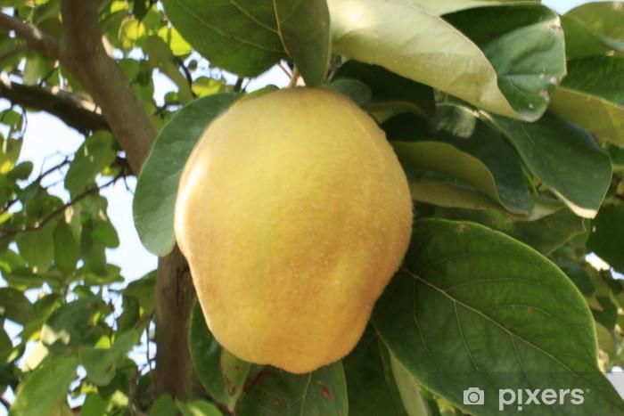 Ayva Ağacı Ve Meyve Duvar Resmi Pixers Haydi Dünyanızı Değiştirelim