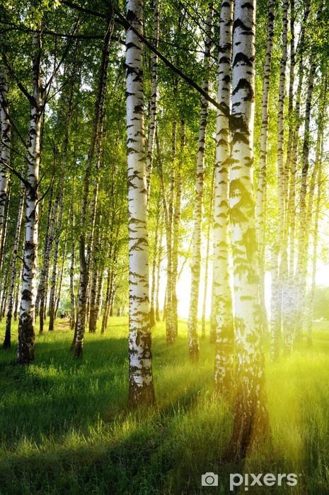 Vinil Duvar Resmi Bir yaz ormanda huş ağaçları -