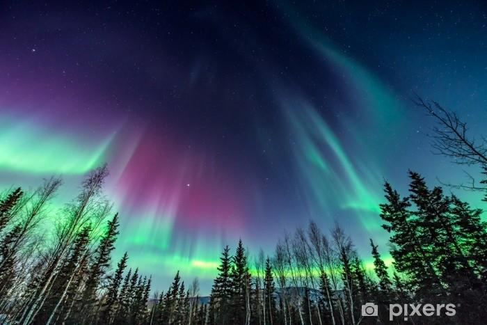 Carta da Parati in Vinile Aurora viola e verde / aurora boreale sopra la linea degli alberi - Panorami