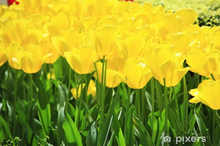 Naklejka Pixerstick Tulipany, żółty - Tematy