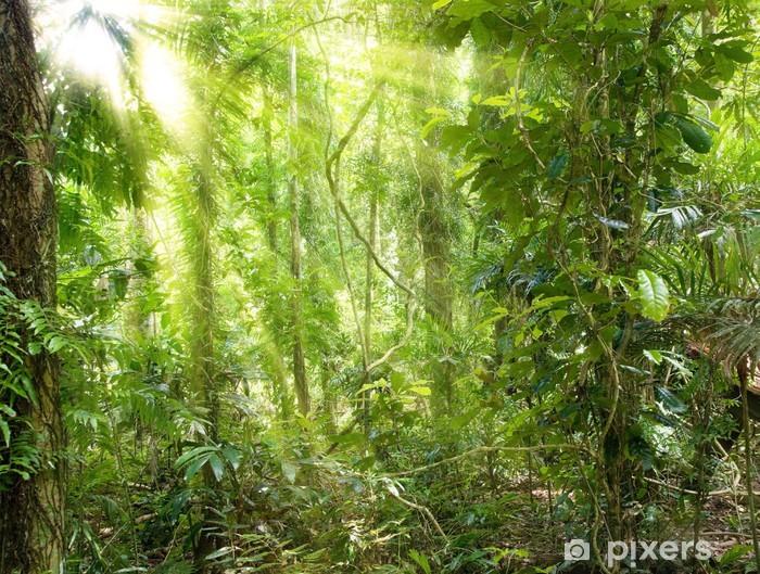 Solskin i regnskoven Vinyl fototapet - Planter