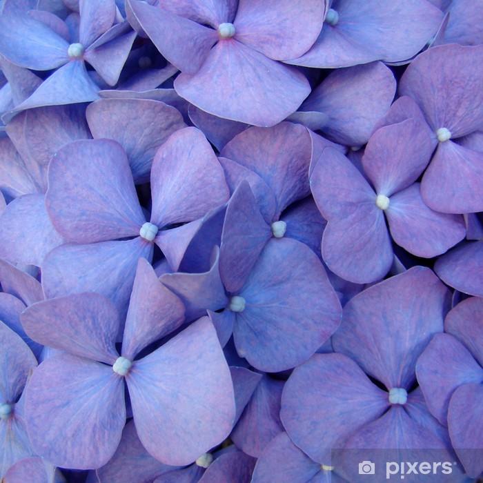 macro of hortensia flower Pixerstick Sticker - Styles