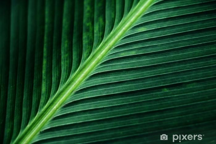 Naklejka Pixerstick Pasiasta tekstura zielony palmowy liść, abstrakt bananowy liścia tło. - Zasoby graficzne