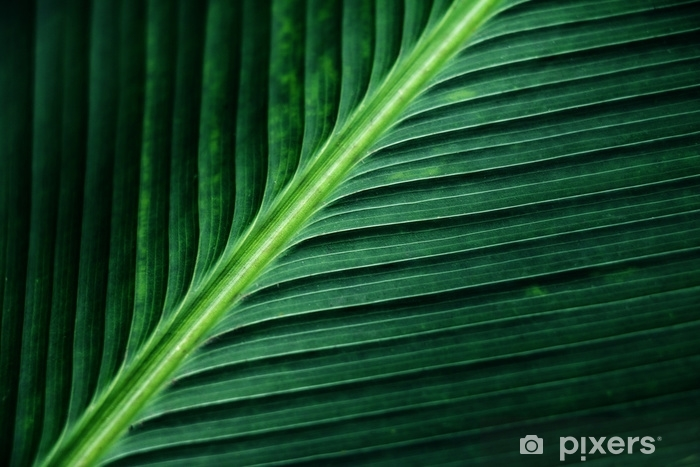 Vinilo Pixerstick Textura rayada de la hoja de palma verde, extracto del fondo de la hoja del plátano. - Recursos gráficos