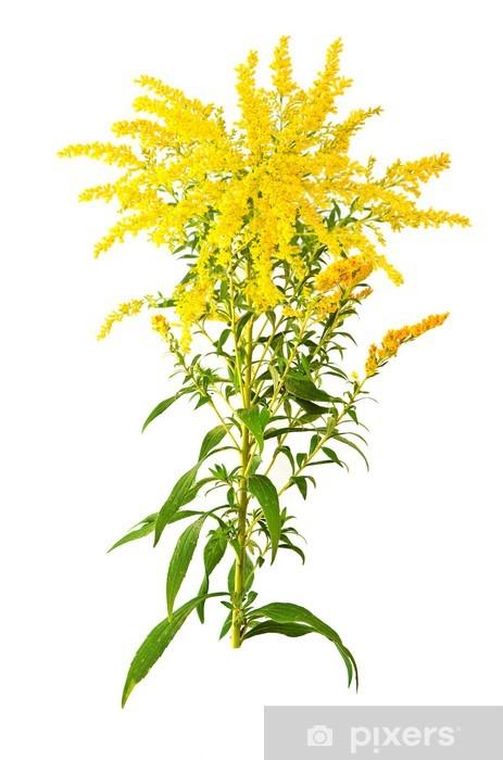Papier peint vinyle Grande verge d'or Fleur - Plantes