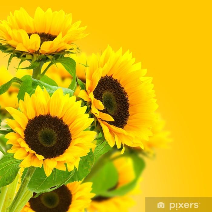 Papier peint vinyle Image d'une fleur tournesol, des tournesols sur fond jaune - Thèmes