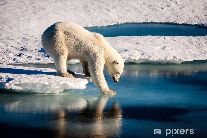 Fototapeta winylowa Majestatyczny niedźwiedź polarny patrząc w lustro - Zwierzęta