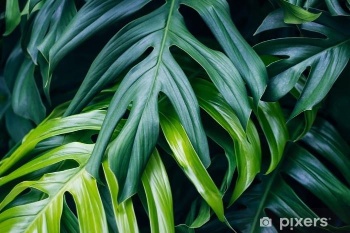 Fotomural Estándar Hojas verdes tropicales sobre fondo oscuro, concepto de planta de bosque de verano de naturaleza - Plantas y flores