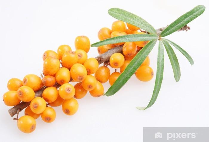 Pixerstick Aufkleber Sanddorn auf einem weißen Hintergrund - Früchte
