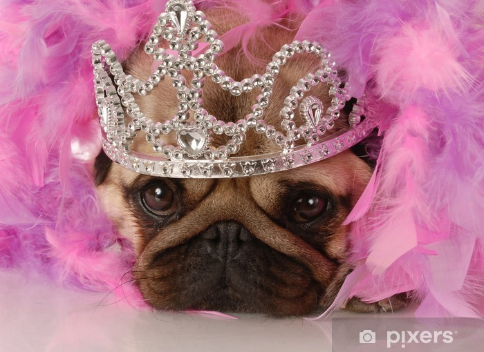 Vinyl Fotobehang Bedorven hond - adorable pug omhoog gekleed als een prinses - Mopshonden