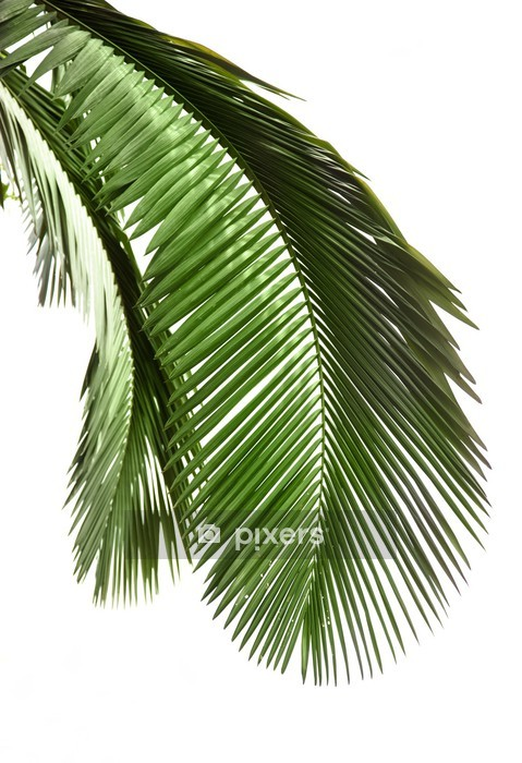 Leaves of palm tree Wall Decal - Wall decals