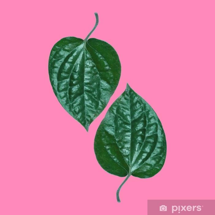 Fototapeta zmywalna Tropikalny zielony liść na różowym tle. minimalistyczny styl, lato minimalistyczna koncepcja. płaski układ. - Rośliny i kwiaty