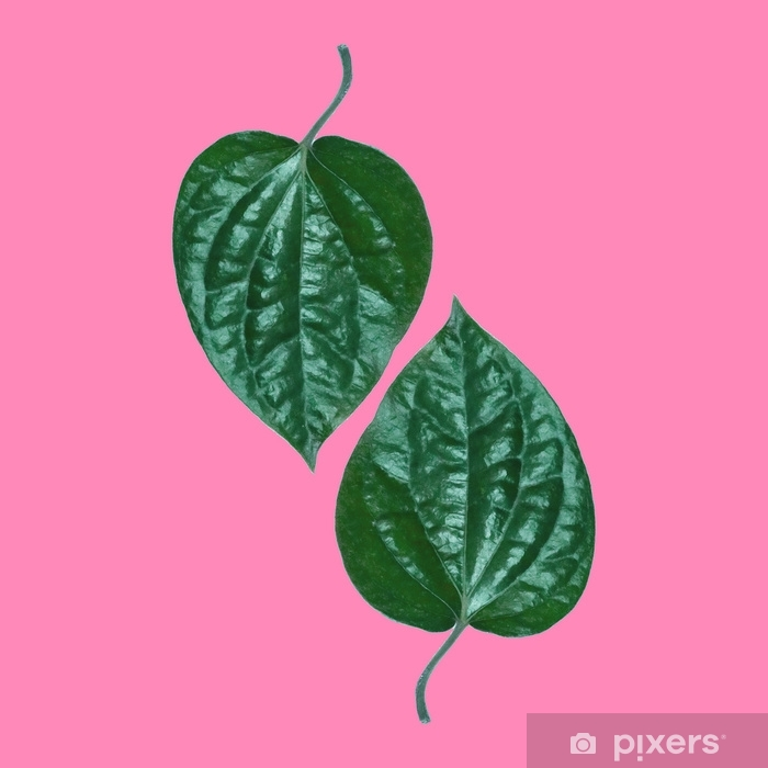 Tropical Green Leaf on pink background. Minimal style,Summer minimal concept. Flat lay. Vinyl Wall Mural - Plants and Flowers