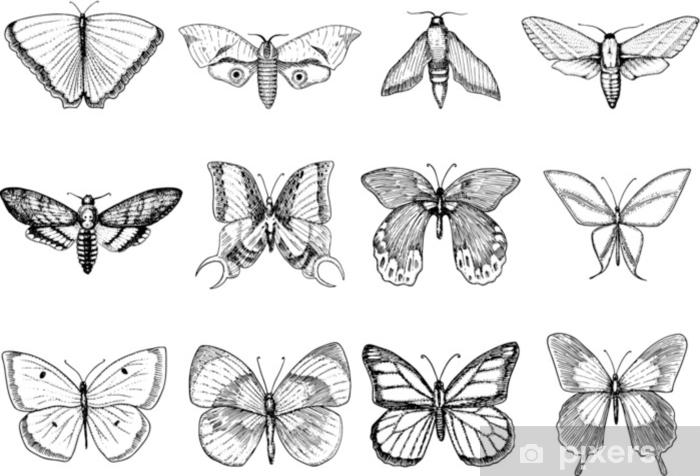 Sticker Tatouage Ou Boho Conception De T Shirt Ou Scrapbooking Symbole Esoterique Mystique De La Liberte Et Du Voyage Croquis De Papillon Ou