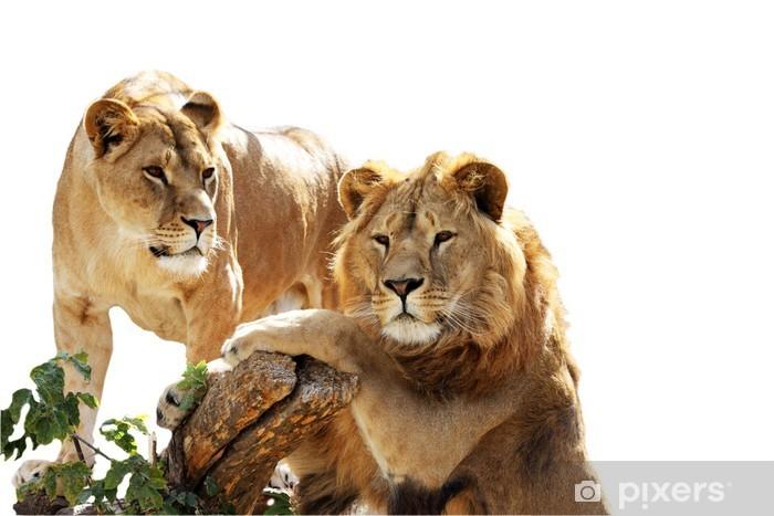 Sticker Pixerstick Lion portrait de famille - Vie de famille