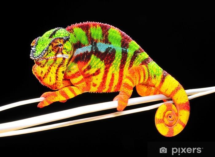 Papier peint vinyle Chameleon Pardalis - Thèmes