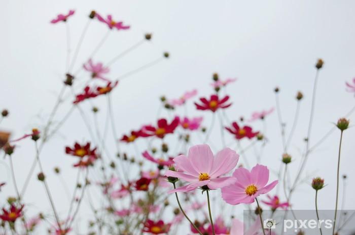 Papier peint vinyle Calliopsis - Fleurs