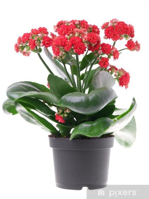Naklejka Pixerstick Calandiva - Kwiaty