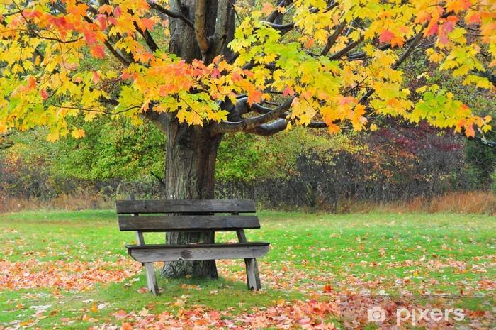 Vinylová fototapeta Antique Dřevěné lavice pod podzimní stromy - Vinylová fototapeta
