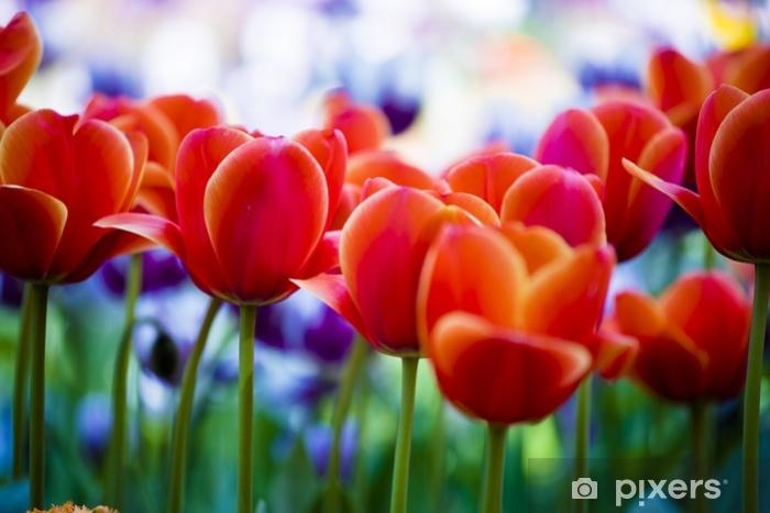 Naklejka Pixerstick Dsc_7284.jpg - Rośliny i kwiaty