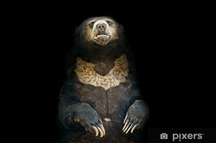 Naklejka Pixerstick Jaskinia Niedźwiedzia - Ssaki