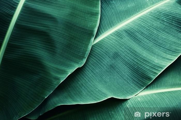 Naklejka Pixerstick Piękny tropikalny bananowy liść tekstury tło - Rośliny i kwiaty