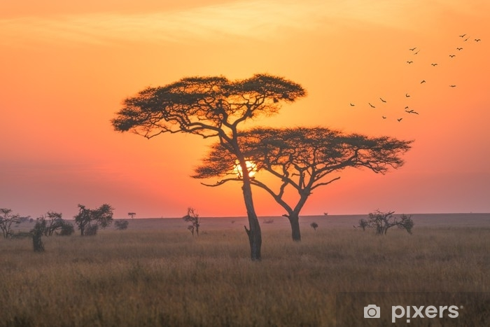 Sunrise in the Serengeti national park,Tanzania Washable Wall Mural - Landscapes