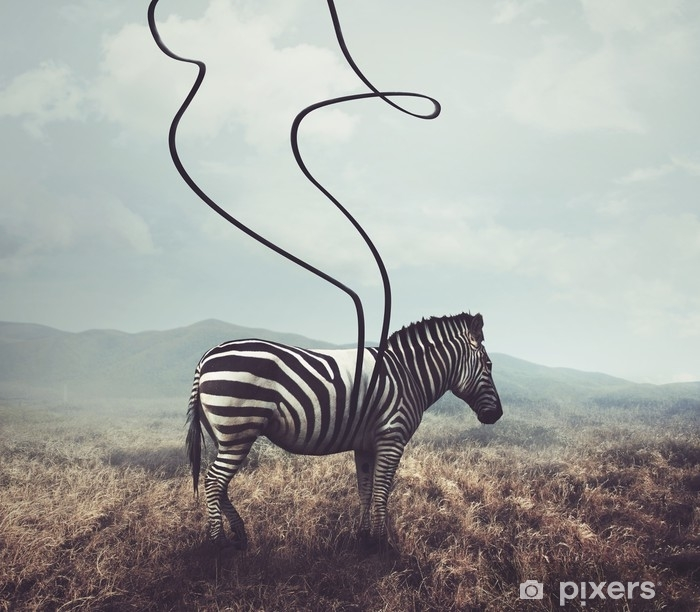 Zebra and stripes Vinyl Wall Mural - Animals