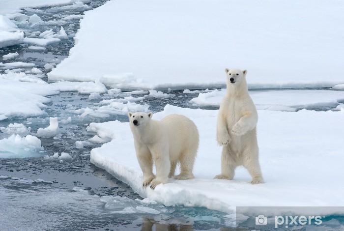 Polar Bears Pixerstick Sticker - Themes
