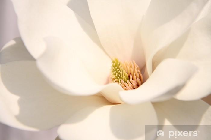 White magnolia flowers Pixerstick Sticker - Themes