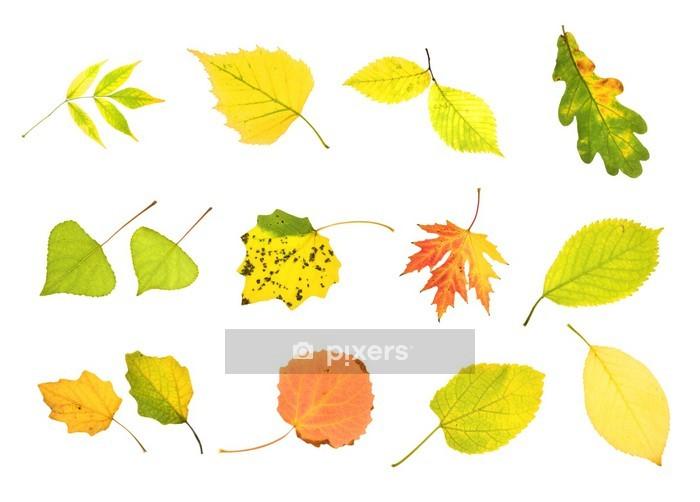 Adesivo da Parete Raccolta Foglie di autunno - Adesivo da parete