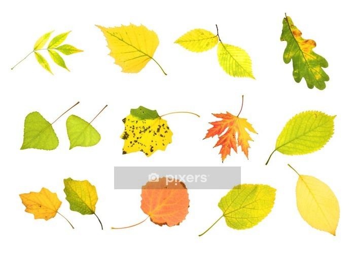 Autumn collection leaves Wall Decal - Wall decals