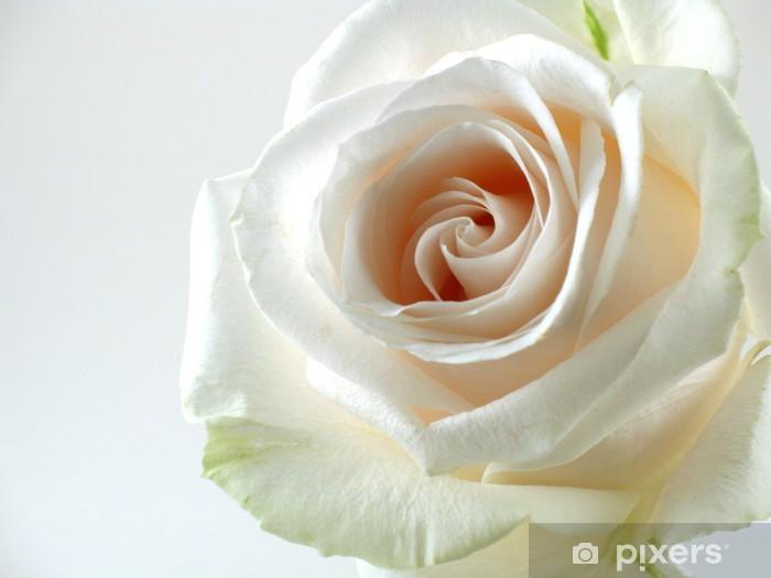 Carta Da Parati Rosa Bianca : Carta da parati rosa bianca su sfondo bianco u2022 pixers® viviamo per