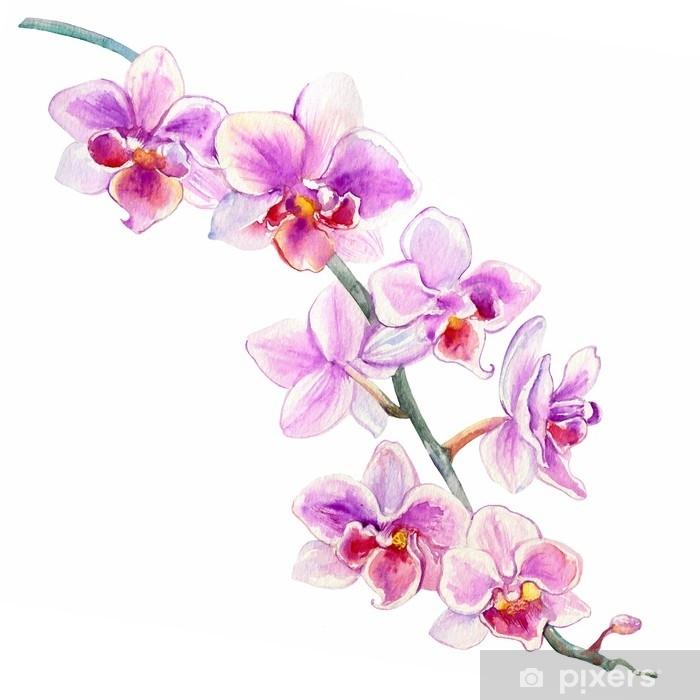 Fototapeta Orchidej Kvetiny Akvarel Rucne Kreslene Botanicke