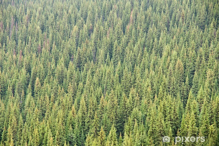Coniferous Forest Vinyl Wall Mural - Trees