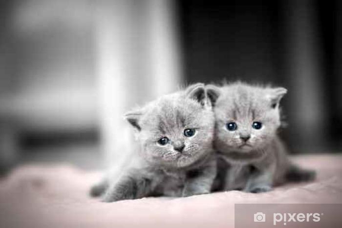 Fotobehang Twee Schattige Kittens Knuffelen Elkaar Britse