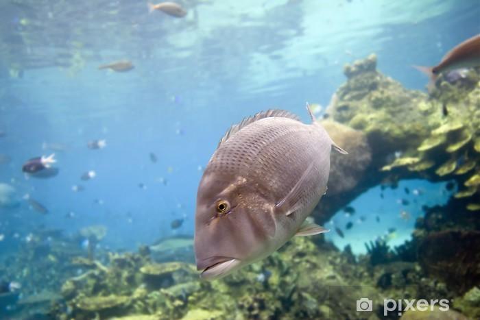 Fotomural Estándar Sweetlip - Animales marinos