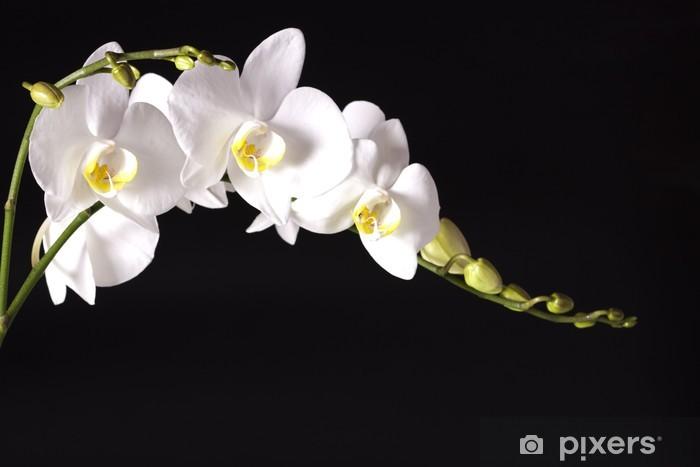 Sticker Pixerstick Orchid sur fond noir - Thèmes