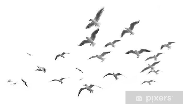 Flying seagulls (isolated) Pixerstick Sticker - Animals