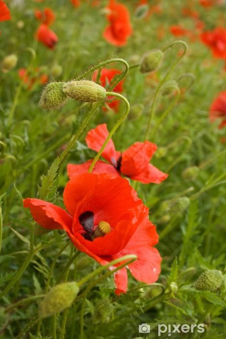 Naklejka Pixerstick Mohnblumenwiese - Kwiaty
